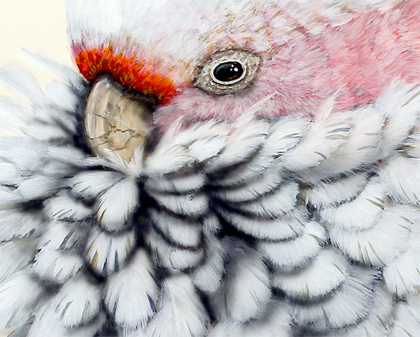 Painting by Paul Margocsy - closeup of pink cockatoo face