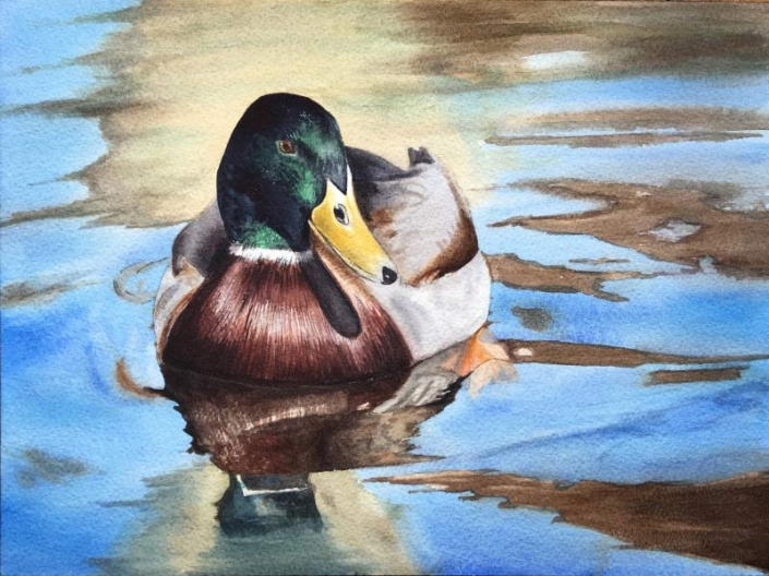 'Duck', watercolour painting of a chestnut teal duck, by Fiona Valentine
