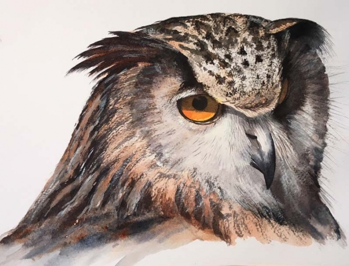 'Owl', watercolour painting of an owl, by Fiona Valentine