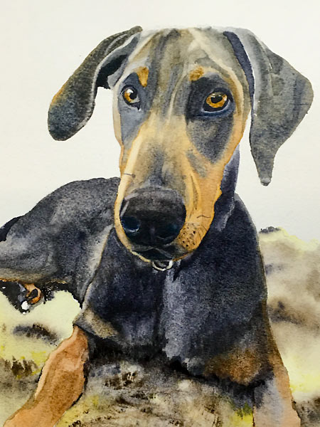 Watercolour painting of a black and tan dog by Sandra Bain, personal project